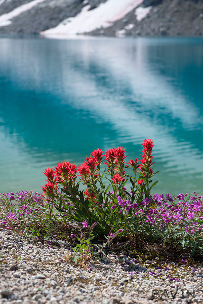 Indian Paintbrush at Thunderwater