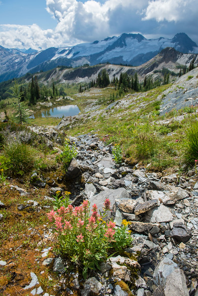 Silver Basin and the Quintets