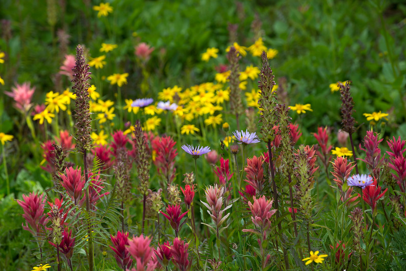 Wildflowers on the Game Trail