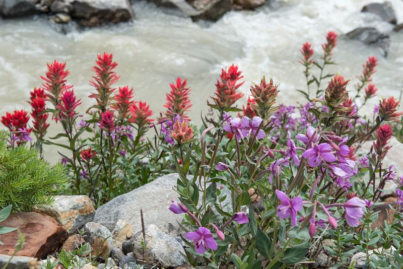 Creek and Alpine Flowers