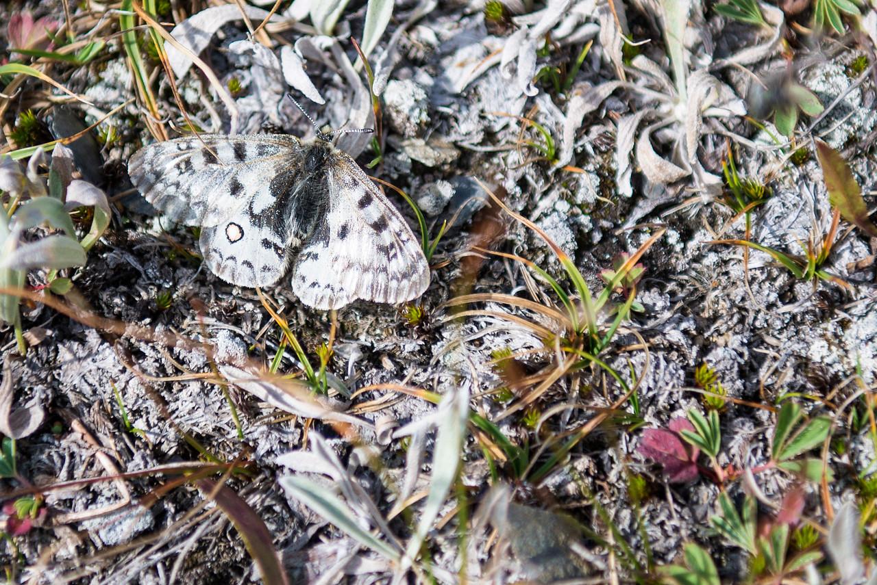 Moth Camouflage