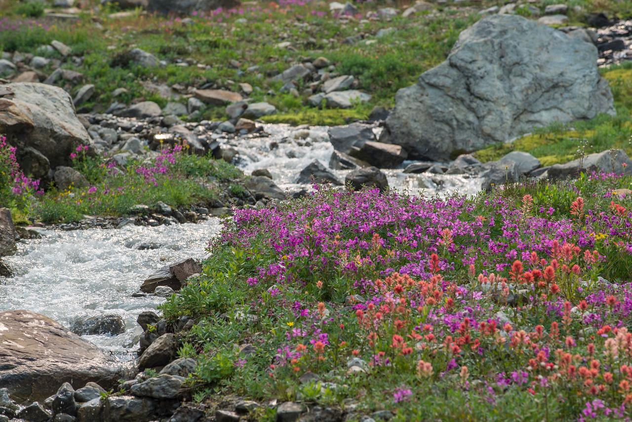 Kickoff Wildflowers