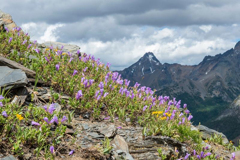 Shrubby Penstemon and Mount Conrad Kain