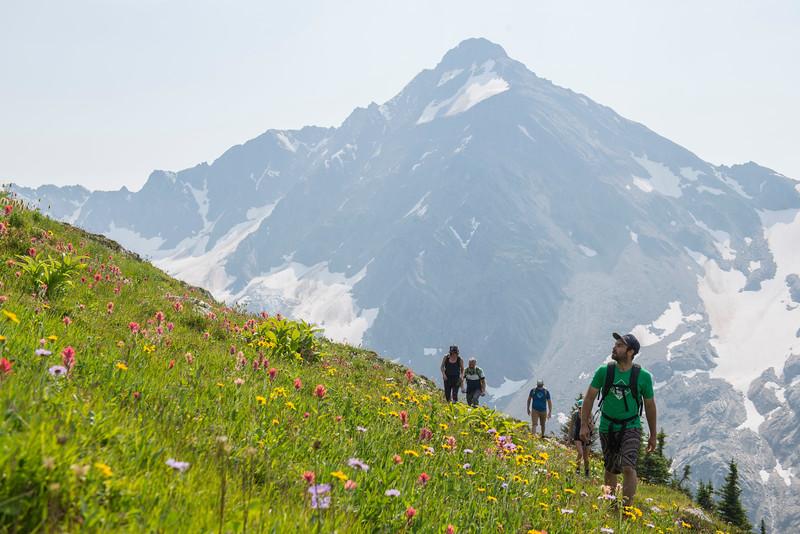Flowery Mountainside near Phacelia Pass