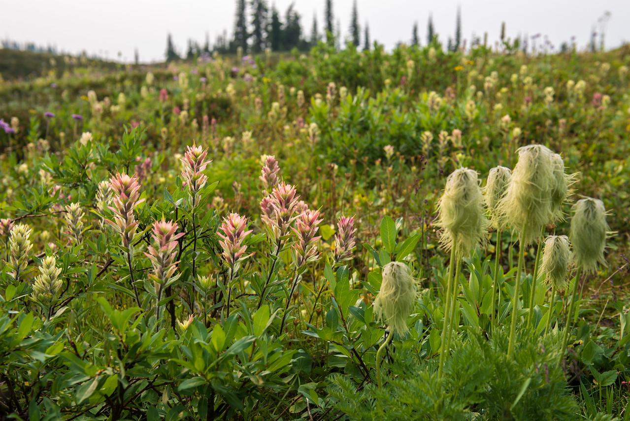 September Flowers on Cariboo Ridge
