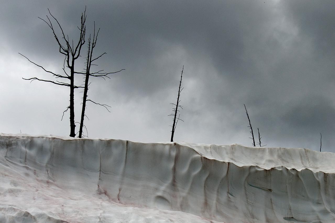 Burnt trees on Easy Roll