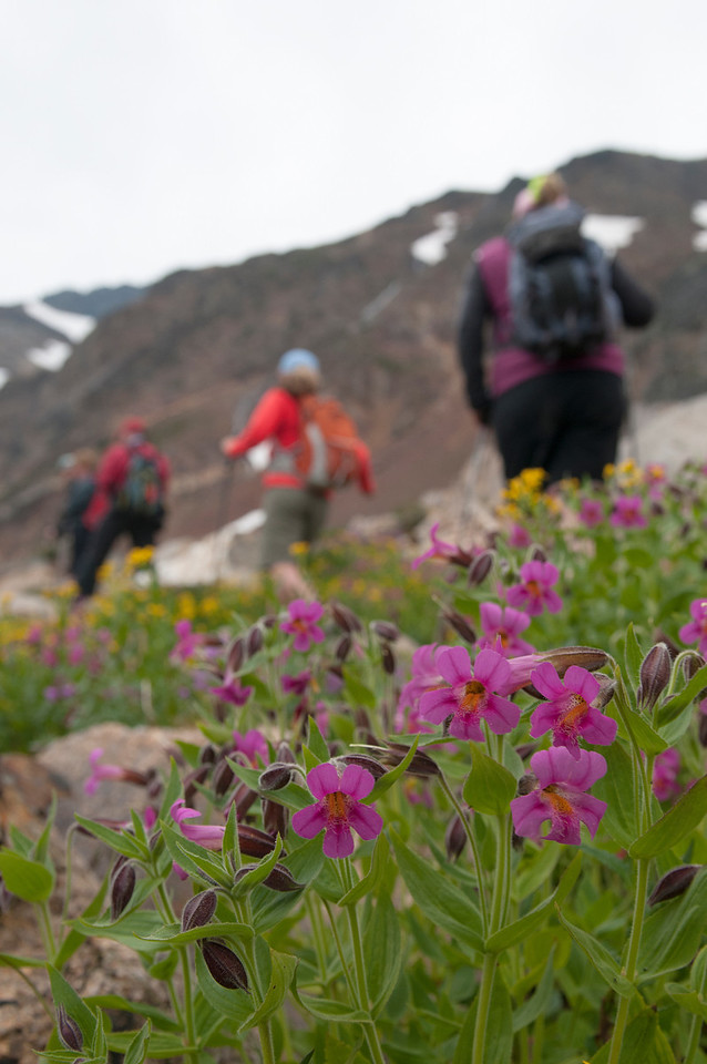 Hiking by the Monkeyflowers