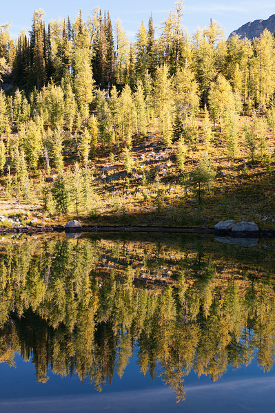 Larch reflection in Almost Dead Elk Lake