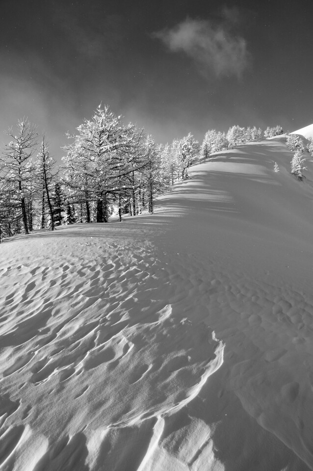 Snow Forms - Black Forest