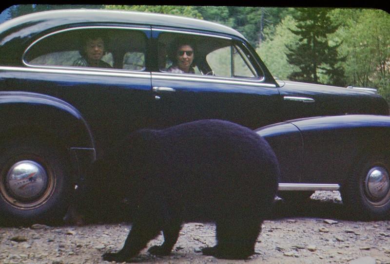 1948 Smokies Bear