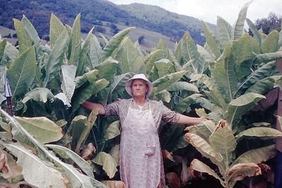 1954 - Mrs  Gilbert Topping Tobacco