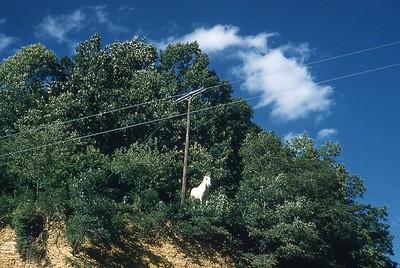 1957 Horse on Ridge