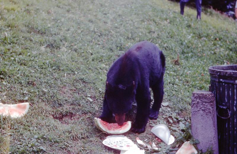 1966 - Bear in Smokies