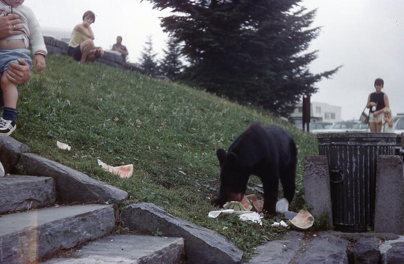 1966 - Bear in Smokies 1