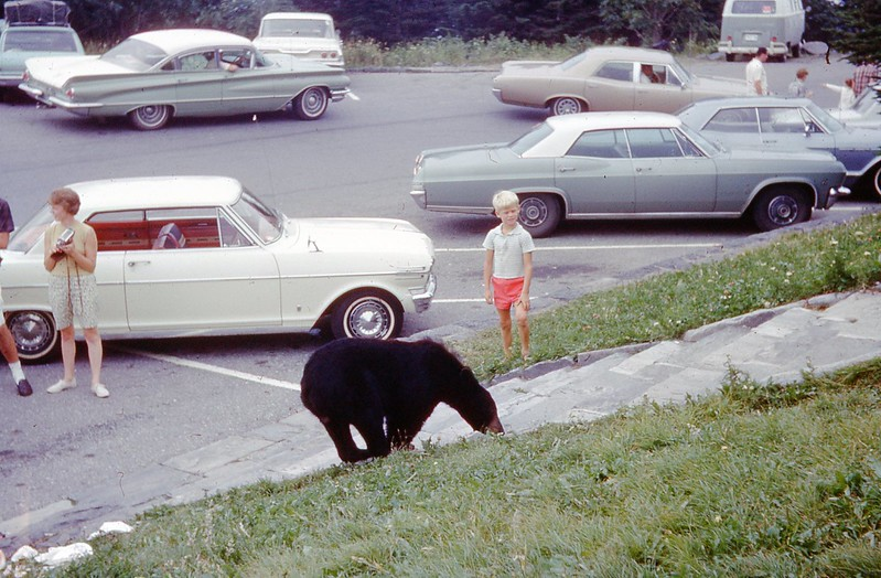 1966 - Bear in Smokies 3