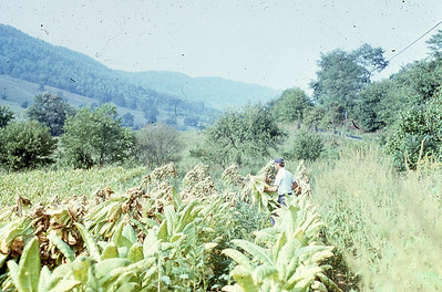 may 1977-''FIELDS''