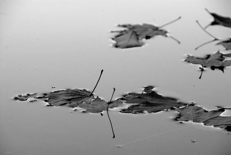 Dieing Lake