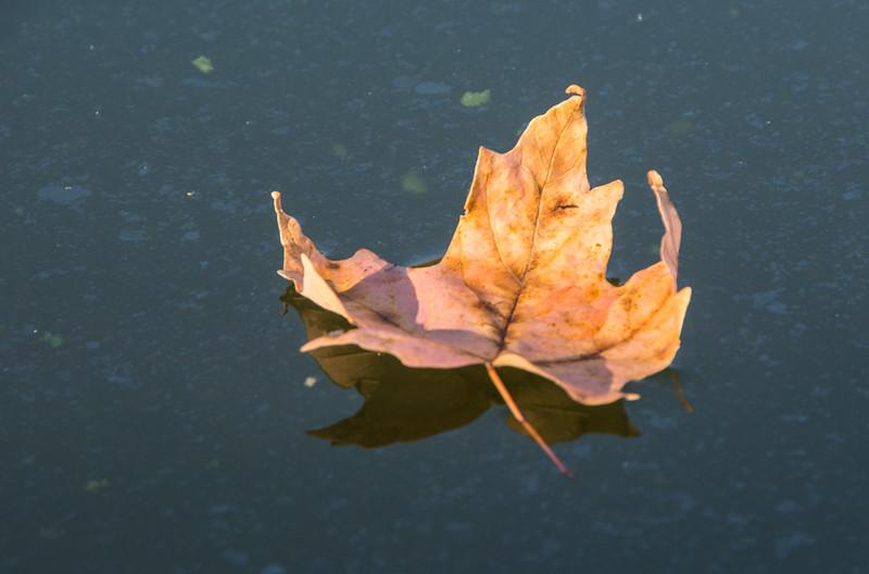 Orange Maple Float