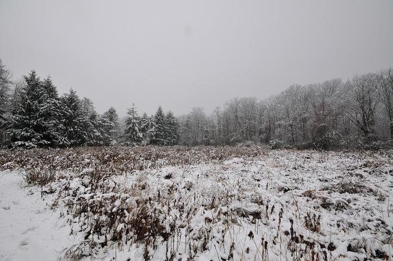 Woodlands Winter Wonderland