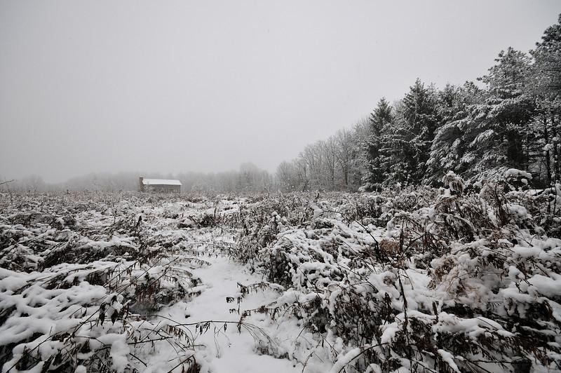 Winter Begins In Rowe Woods