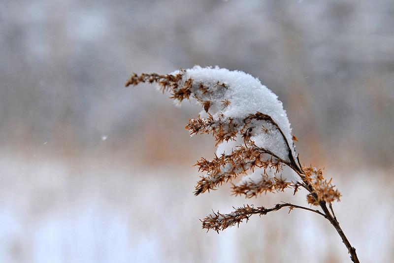 Blizzard of 2008 in the Rowe Woods Prairie
