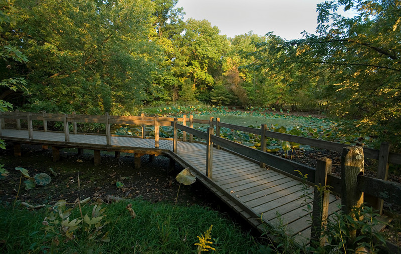 Lotus Pond Cincinnati Nature Center at Rowe Woods