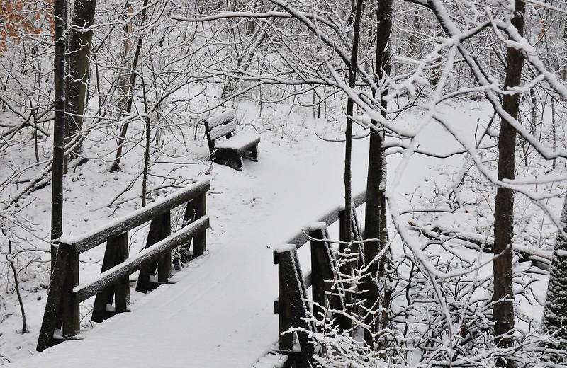 Winter Storm 02-06-2010 Rowe Woods Trails