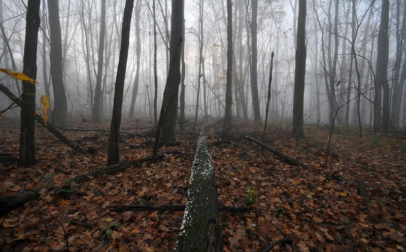 Fallen Tree Foggy Morning