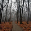Endless Woodland Trail