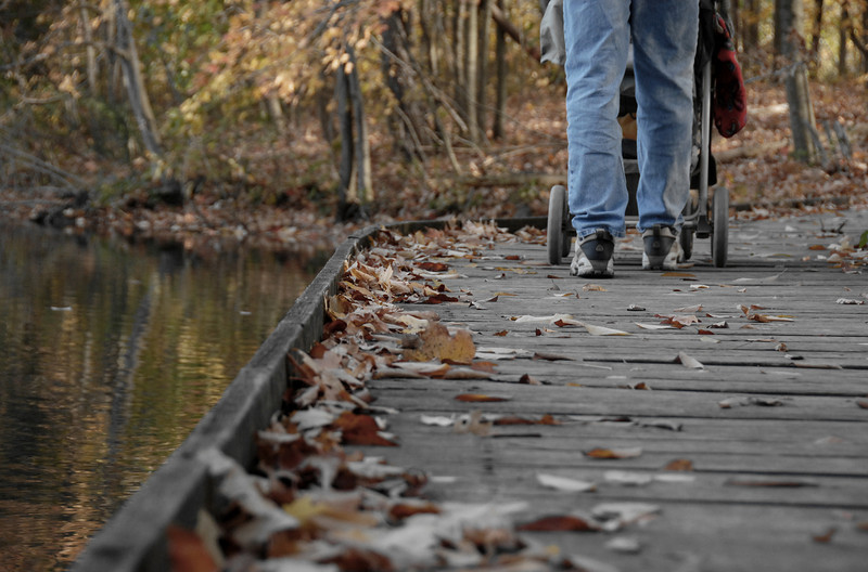 Autumn Family Stroll - The Wooden Walkway, Powel Crosley Lake Cincinnati Nature Center