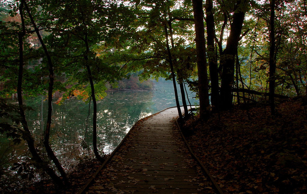 Autumn Morning Woods Walkway Powel Crosley Lake