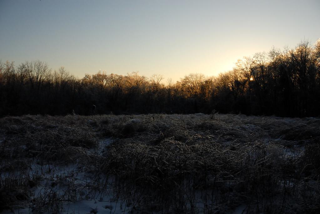Iced Prairie
