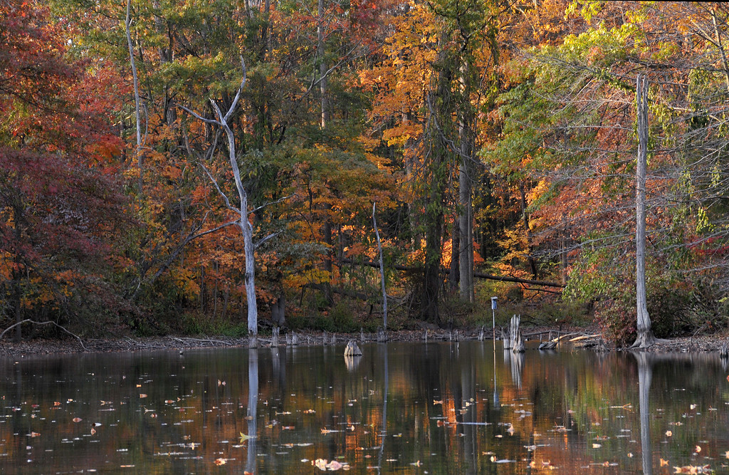 Powel Crosley Autumn Reflections
