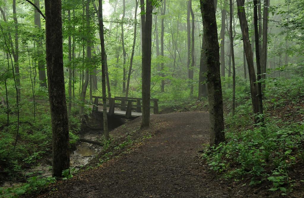 Woodland Trail Bridge Spring Time - Rowe Woods, Cincinnati Nature Center.