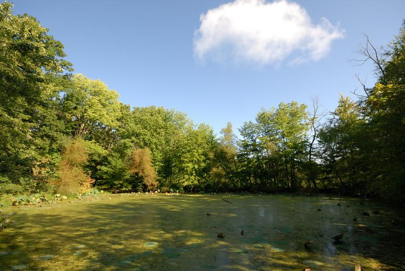 Lotus Pond Morning
