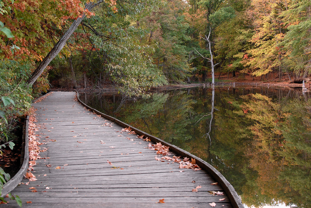 Wooden Walkway Powel Crosley Lake Autumn