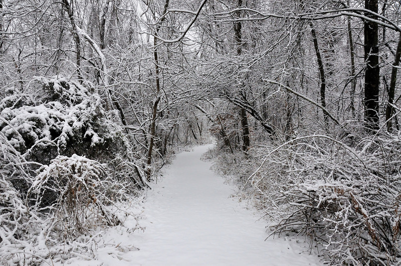 Winter Storm 2010 Hiking Trail Path to Powel Crosley Lake