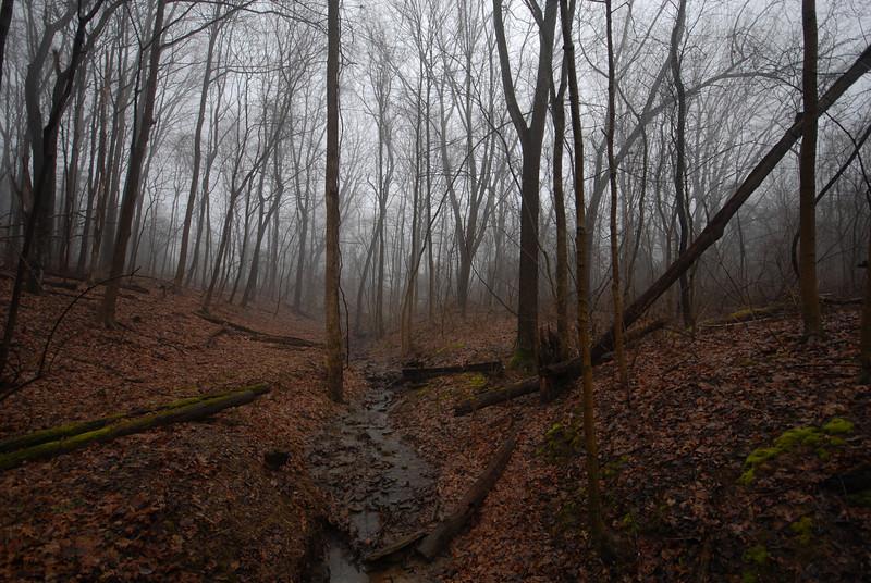 Flow in the Mist    |   Cincinnati Nature Cincinnati at Rowe Woods