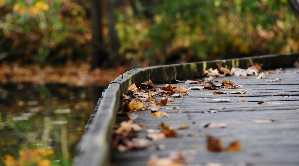 Autumn Wooden Walkway Leaves
