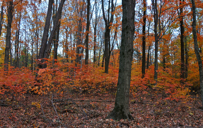 Colorful Woodland Hiking Trail