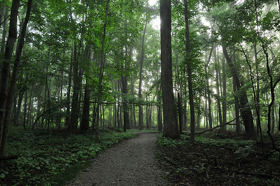 Hiking Trails Crossing Paths