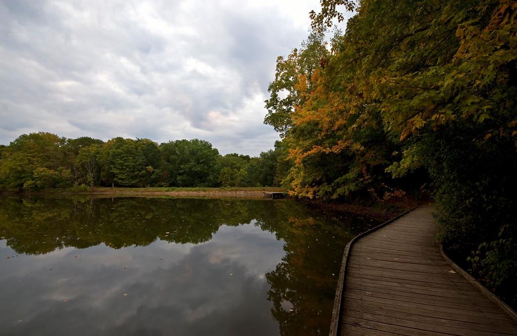 Wooden Walkway Rowe Woods