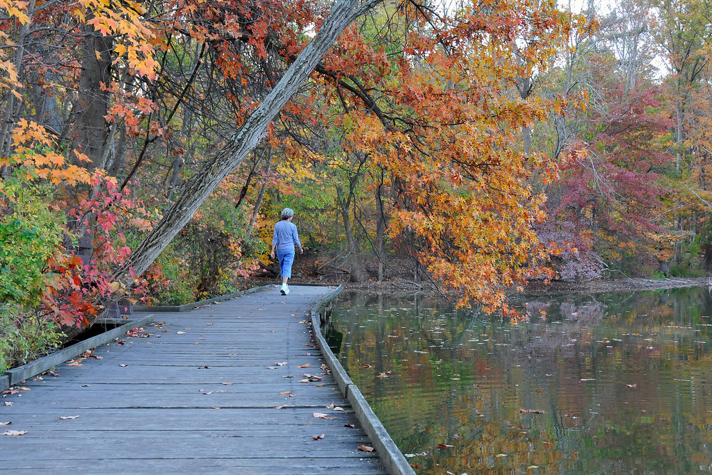 Strolling the Boardwalk - Cincinnati Nature Center at Rowe Woods