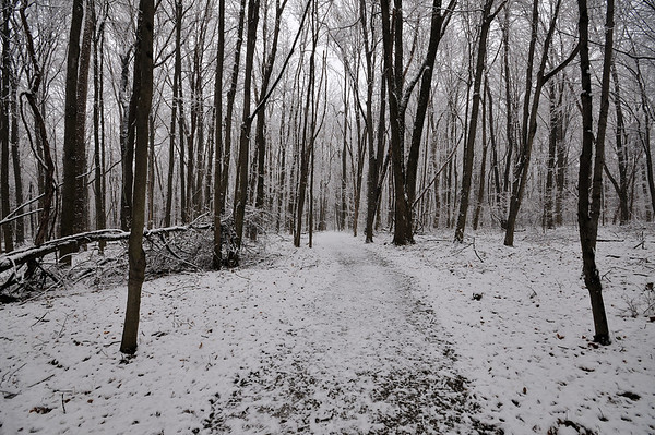 Walking Trail First Snow Morning