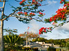 Saipan's glorious flame trees frame the flags at American Memorial Park.