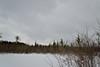 Bog Trail, Beaver Lake