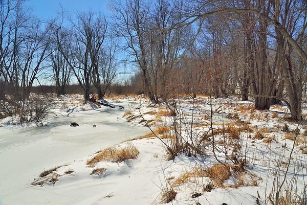 Black Pond WMA 19Mar17