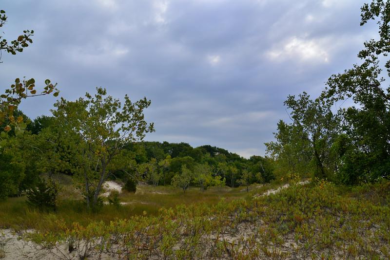 Dunes at Black Pond