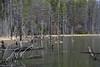 Shackham Pond