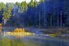 Spruce Pond